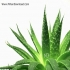 بانک جامع داروهای گیاهی