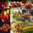 فرآوری محصولات غذایی